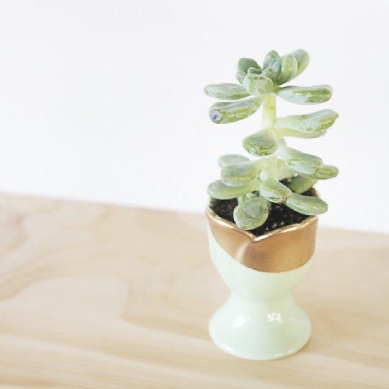 DIY Easter Egg Cup Succulent