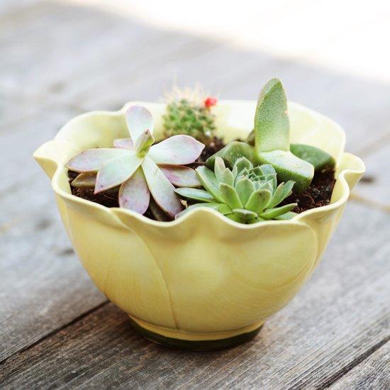Easy DIY Succulent Planter