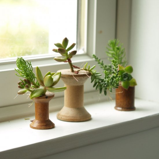 Mini Succulent Garden in a Spool