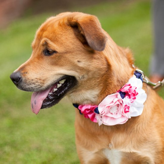 Dog Flower Collar Wedding Flower Wedding Dog Collar
