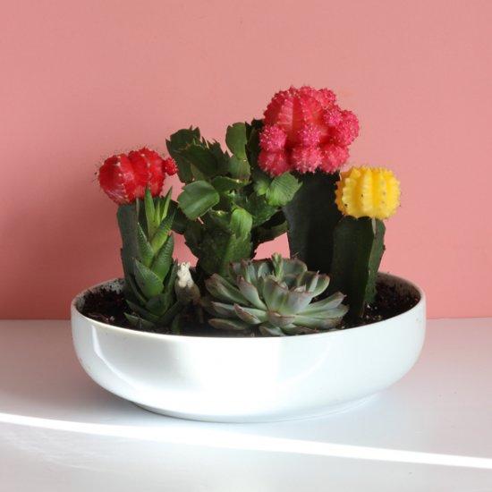 DIY Mini Garden in a Bowl