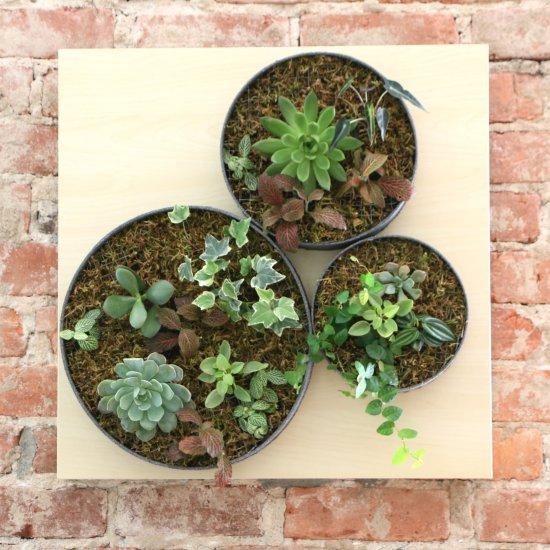 Vertical Wall Succulent Garden