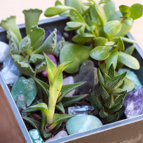 DIY Mini Crystal Succulent Garden
